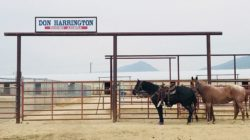 don harrington arena, harrington hirschy horses