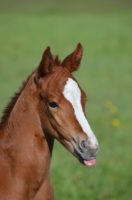Baby-colt-by-Cash-Us-McClain