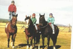 harrington hirschy horses