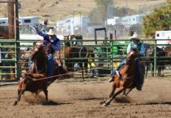 Brooke-heading-on-Oakies-Coz-Donna-at-a-West-Coast-Region-College-Rodeo. harrington hirschy horses