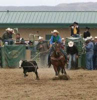 Brooke-roping-on-Lucky-Bee-Doll-at-a-West-Coast-Region-college-rodeo. harrington hirschy horses