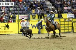 Brooke-roping-on-Rastus-Bunny-Bonnie-at-the-14-College-National-Finals-Rodeo. harringon hirschy horses