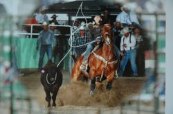 Cate-roping-on-Rastus-Bunnie-Bonnie. harrington hirschy horses