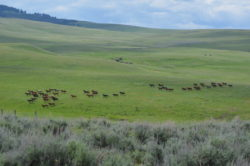 Hirschy horses out on summer pasture