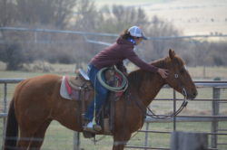 "Kylee Sparks and ""Gusto"" branding at the Hirschy Ranch, jack hirschy livestock, harrington hirschy horses"