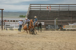 Riley Currin calf roping on Fabio, harrington hirschy horses