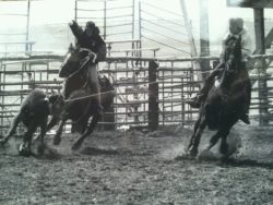 Murphy-and-Montana-Dasher-roping-in-a-snow-storm-at-a-high-school-rodeo harrington hirschy horses