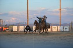 Murphy-on-Dashers-Tana-Zip-at-a-Team-Roping-jackpot. harrington hirschy horses